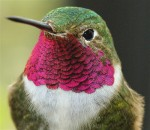 Google Hummingbird | Law Firm Digital Marketing | Get Noticed Get Found
